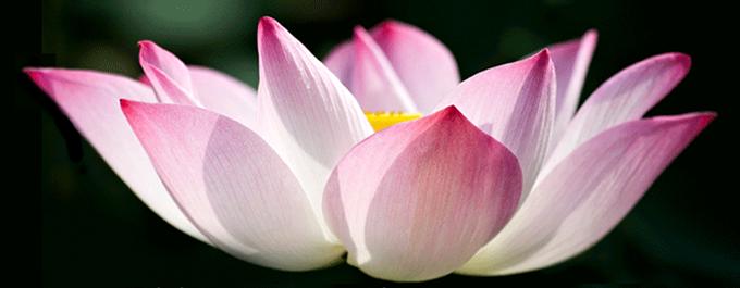 lotus18750 cro87500