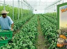 The MUM organic greenhouses