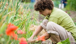 Sustainable Living student at Maharishi University of Management gardening