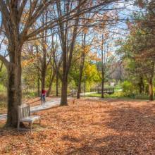 Campus walkways in autumn