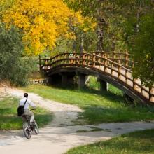 Walking/biking trails and a bridge on campus
