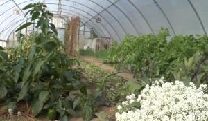 MUM Greenhouses