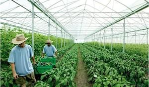 organic-greenhouse
