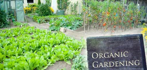 OrganicGardening-c