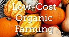 Low-Cost Organic Farming * image of colorful squashes