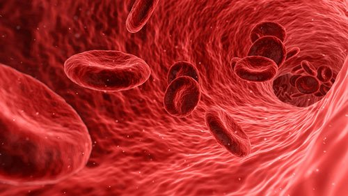 blood-cells-16-9-2